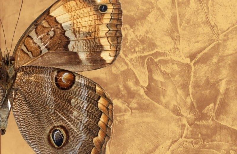 сравнение бабочки и венецианской штукатурки